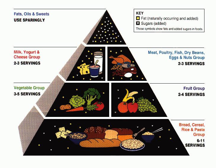 piramida żywienia USA 1992